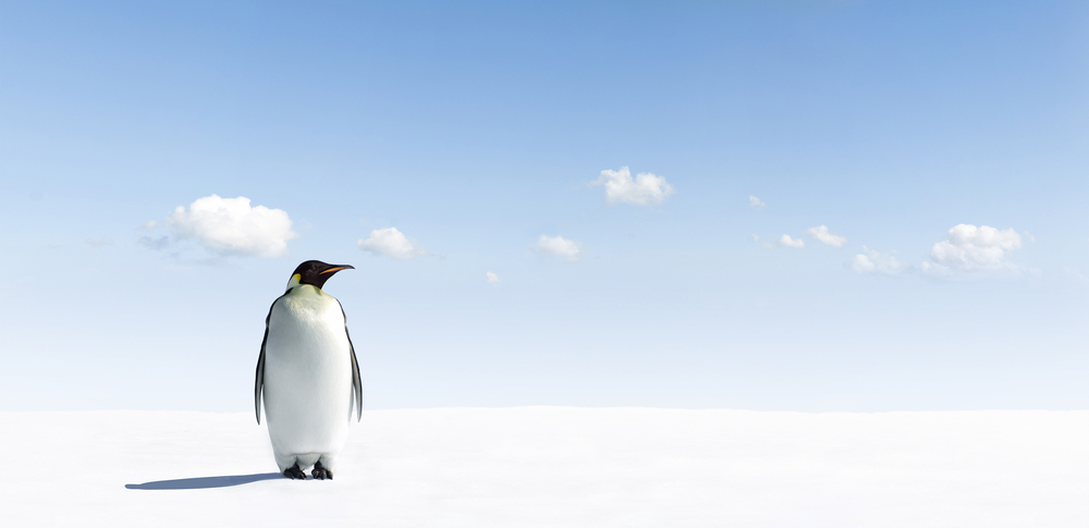 Penguin 4.0, cosa cambia nelle strategie Seo